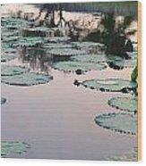 Sunset On Pond Lily Pads Wood Print