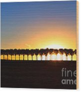 Sunset Over Tree Lined Road Wood Print