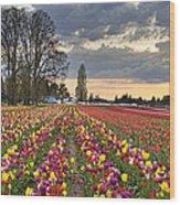 Sunset Over Tulip Flower Farm In Springtime Wood Print