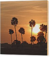 Sunset Palms 1 Wood Print by Roger Snyder