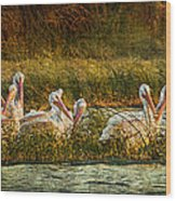Pelicans Rest Wood Print