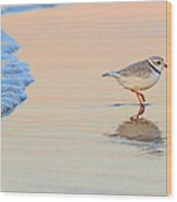 Sunset Piping Plover Wood Print