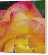 Sunset Rose At Dawn Wood Print by Christine Burdine
