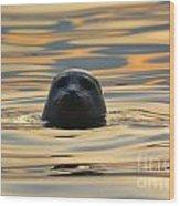 Sunset Seal Wood Print