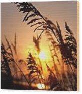 Sunset Seaoats Wood Print