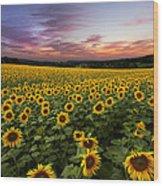 Sunset Sunflowers Wood Print by Debra and Dave Vanderlaan