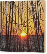 Sunset Through Grasses Wood Print
