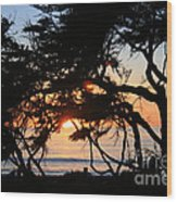 Sunset Through The Cypress Trees Cambria Wood Print