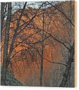 Sunset Through The Forest Wood Print