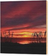 Sunset Through The Sea Oats Wood Print