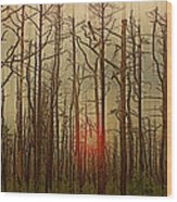 Sunset Thru The Pine Barrens Wood Print