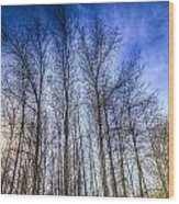 Sunset Trees Wood Print