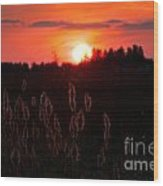 Sunset Wheat Field Wood Print