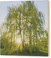 Sunset Willow Wood Print