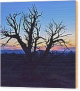 Sunset With Tree Silhouette Wood Print