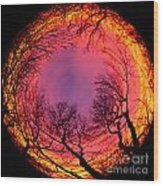 Sunset World Of Trees Wood Print