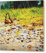 Sunshine Butterfly Wood Print