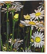 Sunshine Daisies Butter Mellow Wood Print