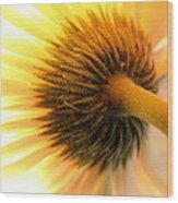 Sunshine Daisy Wood Print