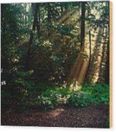 Sunshine Days Greeting Wood Print