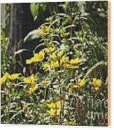 Sunshine Flower 3 Wood Print