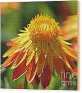 Sunshine Flowers Wood Print