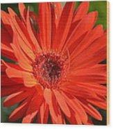 Sunshine Gerber Wood Print
