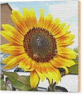 Sunshine In Country Farm Wood Print