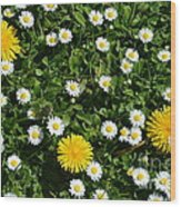 Sunshine In The Daisies Wood Print