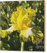 Sunshine Iris Wood Print