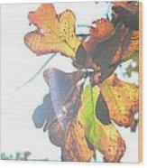 Sunshine Leaves Wood Print