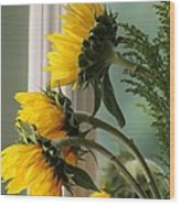 Sunshine On My Face Wood Print by Paula Rountree Bischoff