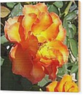 Sunshine On Rose Wood Print by Rosalie Klidies