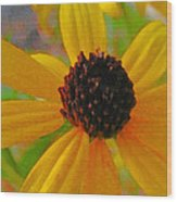 Sunshine On Susan Wood Print