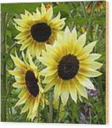 Sunshine Trio Wood Print
