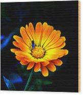 Sunshine- Viator's Agonism Wood Print by Vijinder Singh