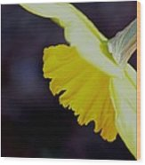 Sunshine Yellow Daffodil Wood Print