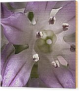 Super Close Up Of A Chive Flower Wood Print