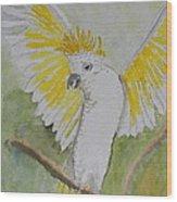 Suphar Crested Cockatoo Wood Print