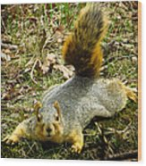 Surprise Mister Squirrel Wood Print