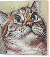 Surprised Kitty Wood Print by Olga Shvartsur