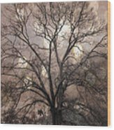 Surreal Fantasy Gothic South Carolina Sepia Oak Trees And Fantasy Bokeh Circles Wood Print by Kathy Fornal