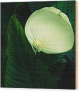 Surreal Peace Lily Wood Print