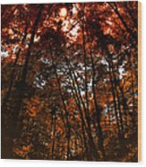 Surrounded By Autumn Wood Print