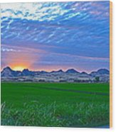 Sutter Buttes Sunset Ray Burst In The Rice Fields  Wood Print