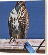 Swainson Hawk Wood Print