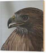 Swainsons Hawk Wood Print