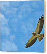 Swainson's Hawk Snake River Birds Of Prey Natural Conservation Area Wood Print