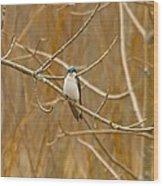 Swallow Wood Print