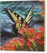 Swallow Tail Butterfly Posing Wood Print